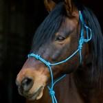 Summerwind_Marchador_horse_2477