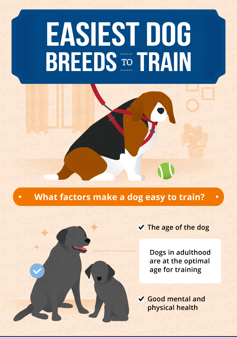 Appealing Easiest Dog Breeds To Factors Make A Dog Easy To Train Easiest Dogs To Train Easiest Guard Dog To Train Easiest Dog To Train Off Leash bark post Easiest Dog To Train