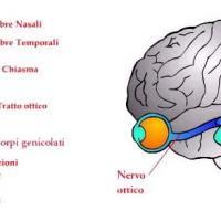 La percezione: storia e analisi del processo cognitivo