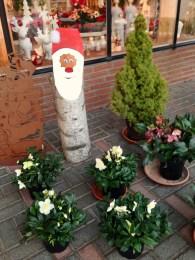 Weihnachten_Nikolaus_Erwitte_Gärtnerei_Enge_Weihnachtssterne_4