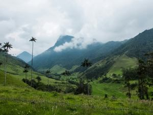 I long for greener places. | Valle de Cocora, Colombia, January 2014.