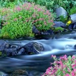 Paradise River Surrounded by Spring Flowers Mt  Rainier National Park Washington e1366414429986 The Golden Chalice Essence