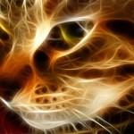 The Healing Abilities of Cats Purrs….
