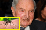 1947 Rockefeller Patent Shows Origins Of Zika Virus: And What About Those Genetically Modified Mosquitoes?