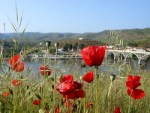 Poppies and a bridge over the Douro