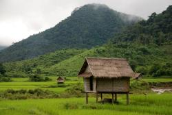 A typical hut in a rice field
