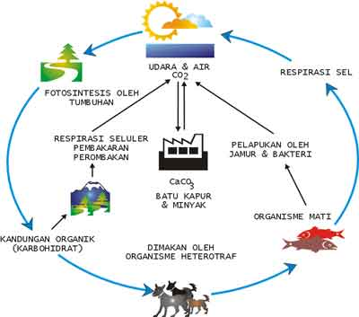 pengertian siklus biogeokimia