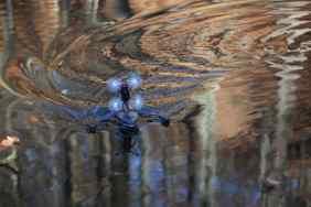 Auf dem Wasser. (Foto: GamingGadgets.de)