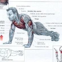 flexão de braços