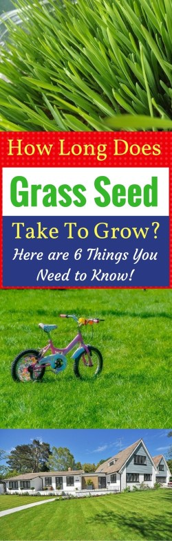 Small Of Fast Growing Grass Seed