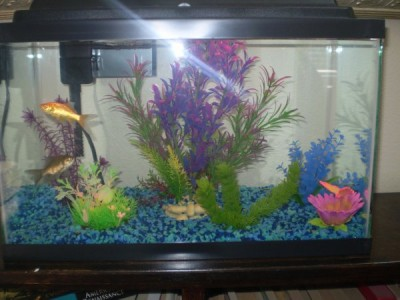 was initially very pleased with our colorful, plastic aquarium decor