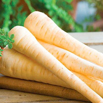 Parsnip Hollow Crown - Parsnip Seeds - Vegetable Seeds - Vegetables - Garden - Dobies