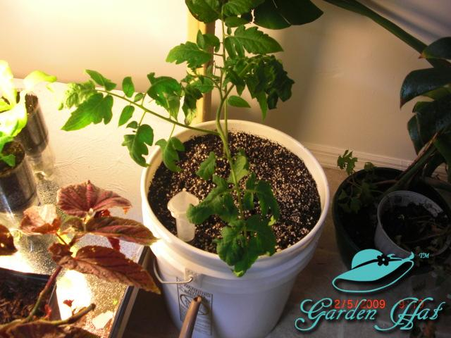 Garden Hat Sub-Irrigated Planters