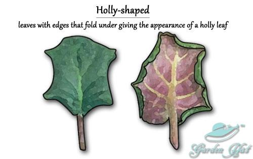 Garden Hat - African Violet Leaf Types - Holly-Shaped