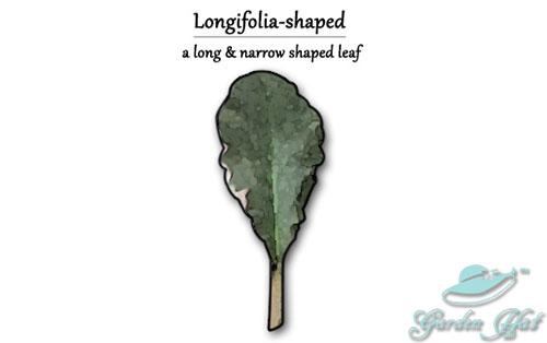 Garden Hat - African Violet Leaf Types - Longifolia