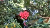 Garden_Hat_Garden_Adventures_Mitchell_Park_9_15