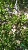 Garden_Hat_Garden_Adventures_Mitchell_Park_Desert_Dome_9_15