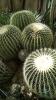 Garden_Hat_Garden_Adventures_Mitchell_Park_Desert_Dome_9_19
