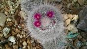Garden_Hat_Garden_Adventures_Mitchell_Park_Desert_Dome_3