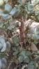 Garden_Hat_Garden_Adventures_Mitchell_Park_Desert_Dome_9_14