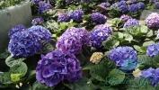 Garden_Hat_Garden_Adventures_Mitchell_Park_Show_Dome_4