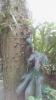 Garden_Hat_Garden_Adventures_Mitchell_Park_9_35