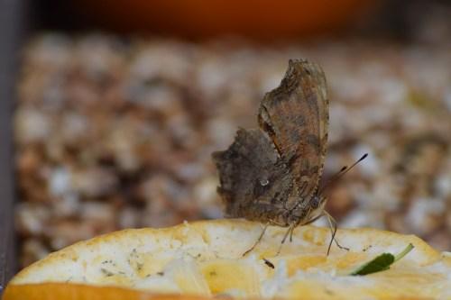 Medium Of Little White Butterflies