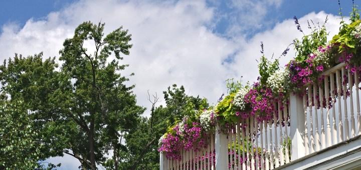 balcony-flowers-686889_960_720