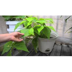 Small Crop Of You Tube Container Gardening