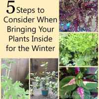 Fall Gardening - 5 Steps to Consider When Bringing Your Plants Inside for the Winter