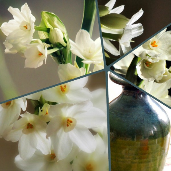 paperwhites collage