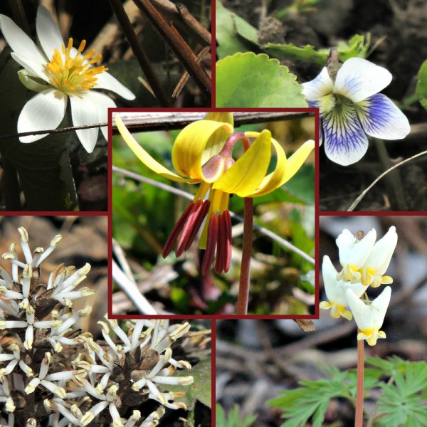 wildflowers collage