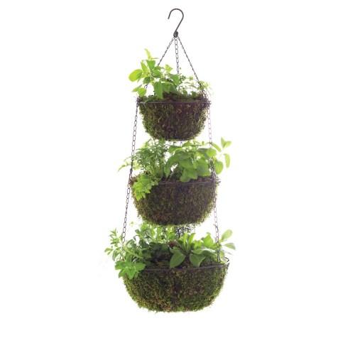 Medium Crop Of Hanging Herb Garden