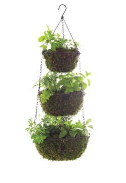 Small Of Hanging Herb Garden