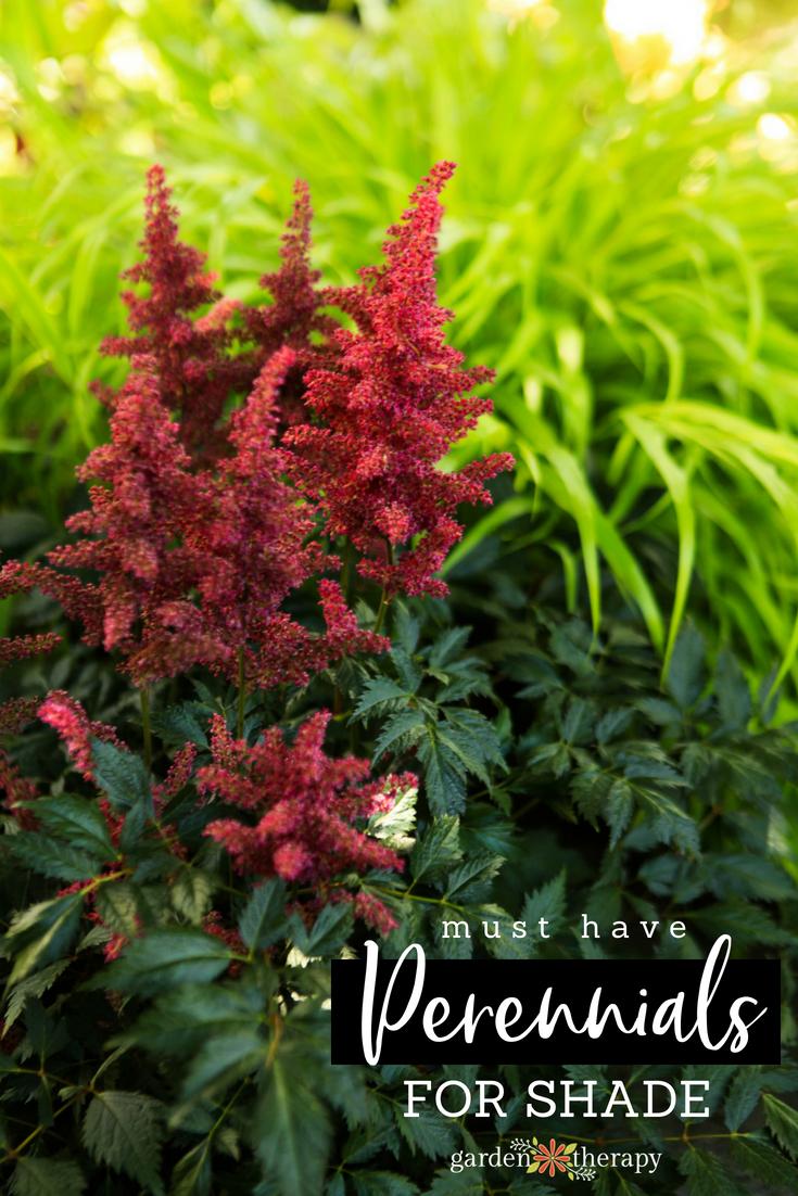 Dark Perennials Shade Gardens Garden Rapy Annual Flowers Shade That
