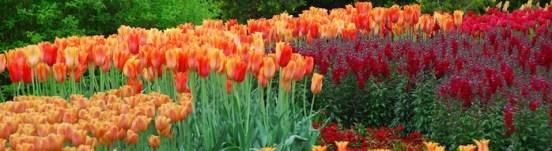 Longwood Gardens, Brandywine Valley in Spring