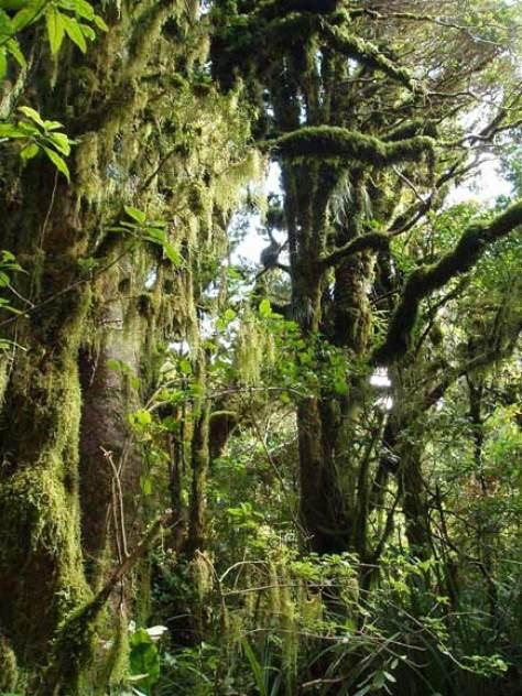 Goblin Forest Egmont National Park