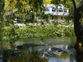 Hortensia Garden Marlborough By John Patrick