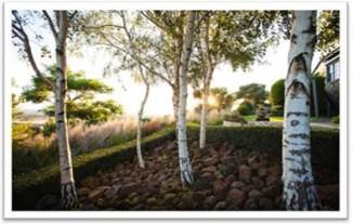 Jellett-garden
