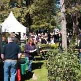 Busy stalls at Lanyon plant fair copy