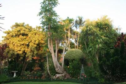 Garden at Rosetta House B&B in Durban, KwaZulu-Natal, South Africa