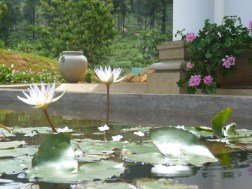 Mandulkelle Tea and Eco Lodge garden and water lilies