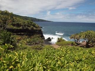 Hawaii natural vegetation