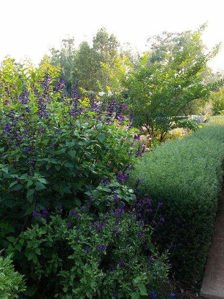 Leanne and John Anderson's garden, Condobolin