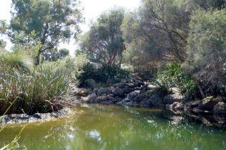 Kings Park Western Australia Photo Sandy Lim