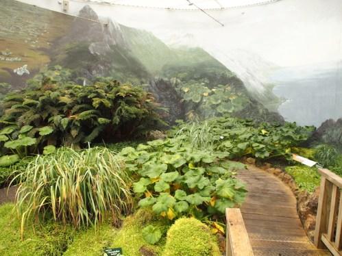 Macquarie Island display Hobart Botanic Garden