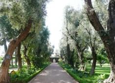 Morocco Marrakesh - Hotel La Mamounia's olive avenue