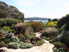 Rose Bay garden, Sydney. Design Barbara Landsberg
