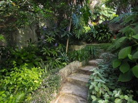Vaucluse garden. Design Christopher Owen
