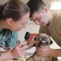 como escolher veterinario gato cachorro